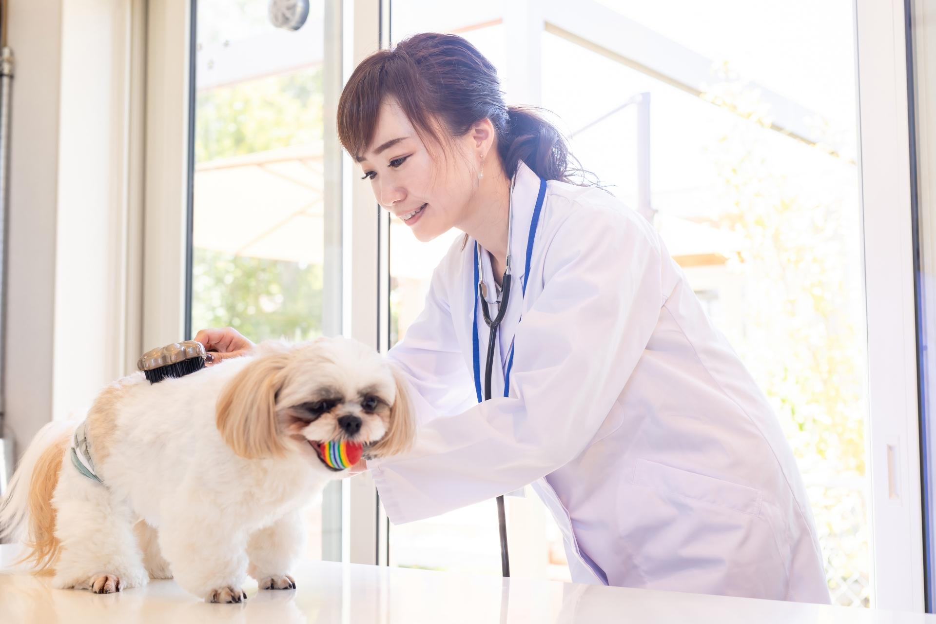 ペット看護士